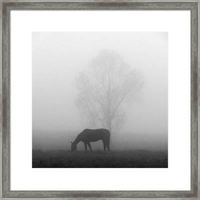 Horses Of The Fall  Bw Framed Print