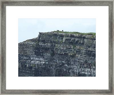 Horses On Cliff Framed Print