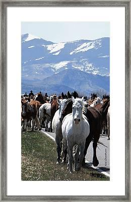Horses On Road Framed Print