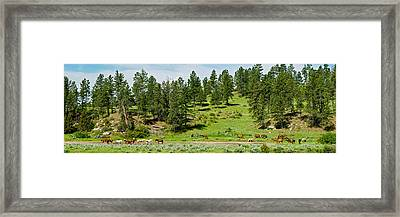Horses On Roundup, Billings, Montana Framed Print by Panoramic Images