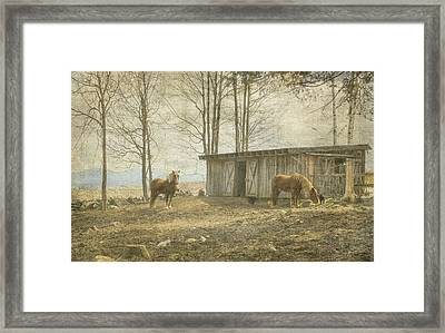 Horses On The Farm Framed Print