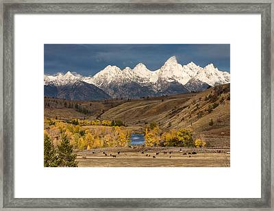 Horses On The Gros Ventre River Framed Print