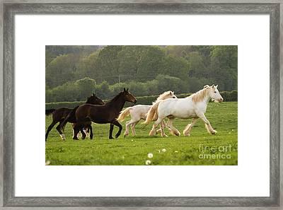 Horses On The Meadow Framed Print by Angel  Tarantella