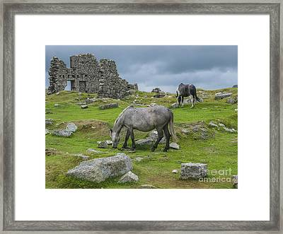 Horses On The Moors Of Dartmoor Framed Print by Patricia Hofmeester
