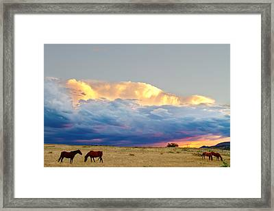 Horses On The Storm Framed Print by James BO  Insogna