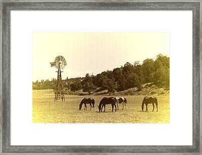 Horses Framed Print by Paul Van Baardwijk
