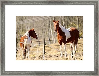 Horses Posing Framed Print
