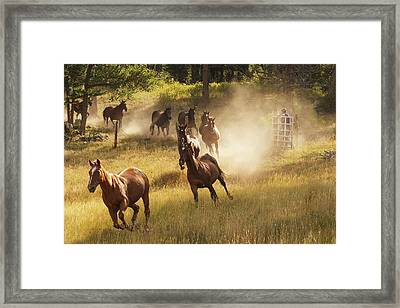 Horses Running Into Pasture In Early Framed Print by Piperanne Worcester