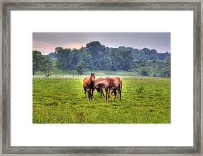 Horses Socialize Framed Print by Jonny D