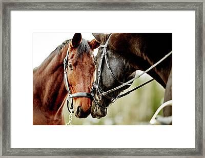 Horses Together Framed Print by Johner Images