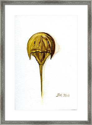 Horseshoe Crab 1 Framed Print
