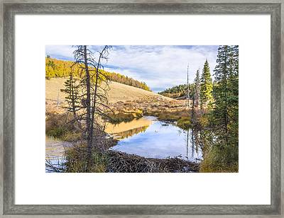 Horsethief Creek Beaver Pond - Cripple Creek Colorado Framed Print by Brian Harig