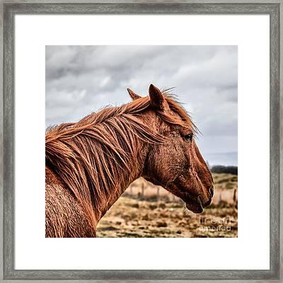 Horsey Horsey Framed Print by John Farnan