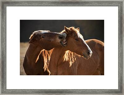 Horsing Around Framed Print by Paul Huchton