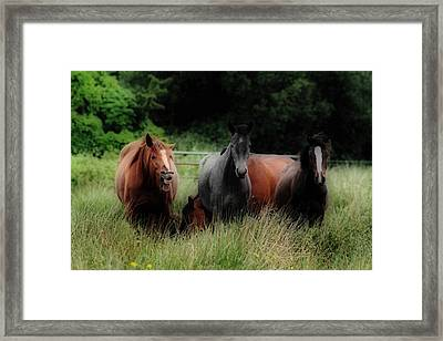 Horsing Around Framed Print by Peter Skelton