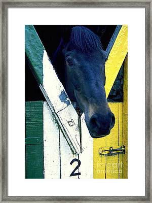Framed Print featuring the photograph Horsing Around by Ranjini Kandasamy