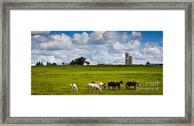 Framed Print featuring the photograph Horsing Around  by Ricky L Jones