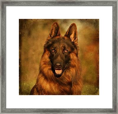 Hoss - German Shepherd Dog Framed Print by Sandy Keeton