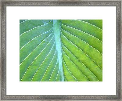 Hosta Leaf Close-up Framed Print by Anna Miller