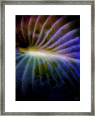 Hosta Leaf Framed Print by Matt Lindley
