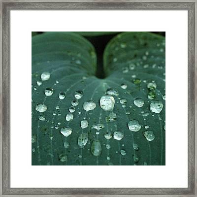 Hosta Leaf With Dew Framed Print by Anna Miller