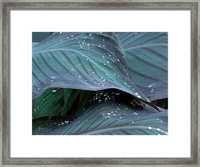 Hosta Leaf With Dew, Close-up Framed Print by Anna Miller