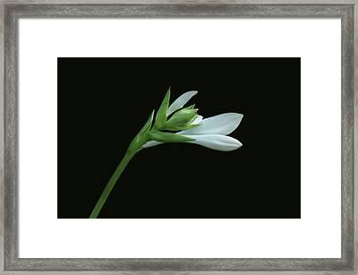 Hosta Framed Print by Sandy Keeton