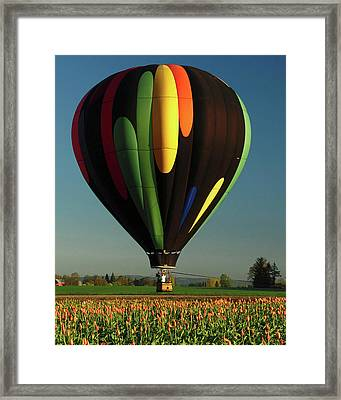 Hot Air Balloon, Tulip Festival Framed Print
