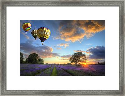 Hot Air Balloons Flying Over Lavender Landscape Sunset Framed Print by Matthew Gibson