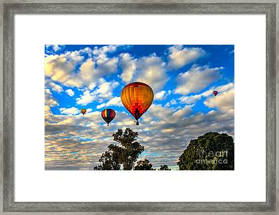 Hot Air Balloons Over Trees Framed Print by Robert Bales