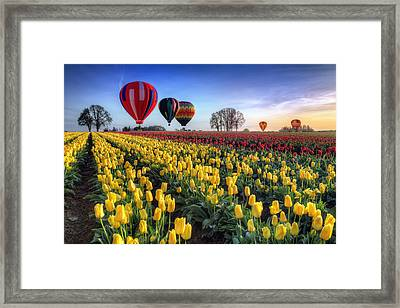 Framed Print featuring the photograph Hot Air Balloons Over Tulip Fields by William Lee