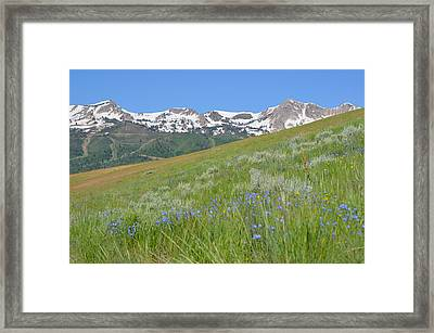 Hot And Cold Framed Print by Amanda Powell