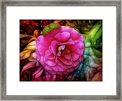 Hot And Silky Pink Rose Framed Print