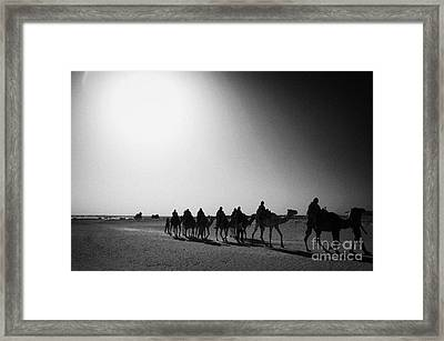 hot desert sun beating down on camel train in the sahara desert at Douz Tunisia Framed Print by Joe Fox