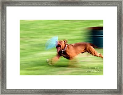 Hot Dog Framed Print by Arie Arik Chen