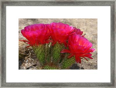 Framed Print featuring the photograph Hot Hot Hot by Tammy Espino