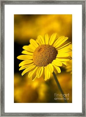 Hot In The Sun Framed Print by Joy Watson