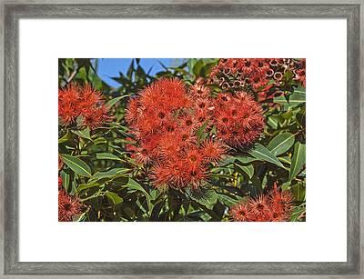 Hot Orange Framed Print
