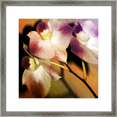 Framed Print featuring the photograph Hot Orchid Nights by Holly Kempe