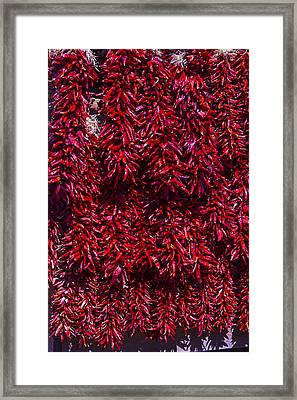 Hot Peppers Framed Print by Garry Gay