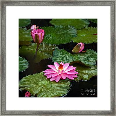 Hot Pink And Green Tropical Waterlilies Framed Print