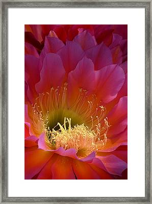 Hot Pink Beauty Framed Print