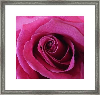 Hot Pink II Framed Print by Anna Villarreal Garbis