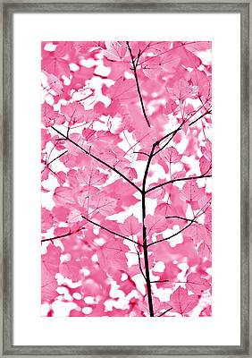 Hot Pink Leaves Melody Framed Print
