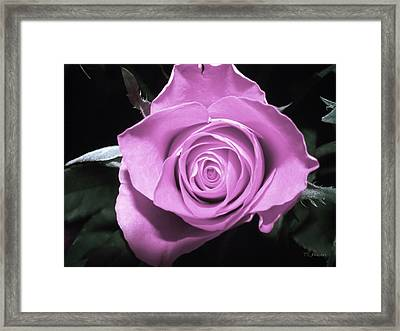 Hot Pink Rose Framed Print