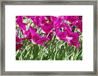 Framed Print featuring the photograph Hot Pink Tulips 2 by Allen Beatty