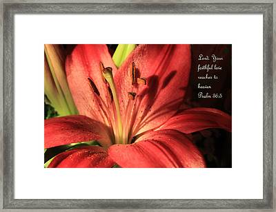 Hot Red Lily Ps. 36v5 Framed Print by Linda Phelps
