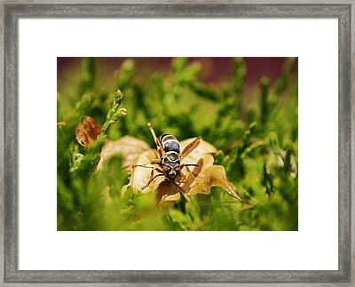 Framed Print featuring the photograph Hot Wasp... by Al Fritz