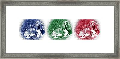 Hound Colors Framed Print by John Rizzuto