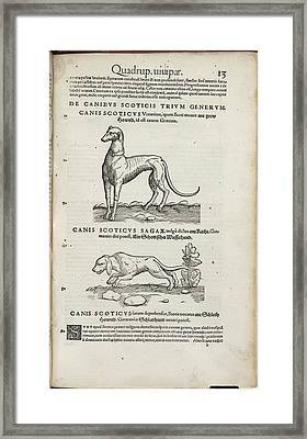 Hounds Framed Print by British Library